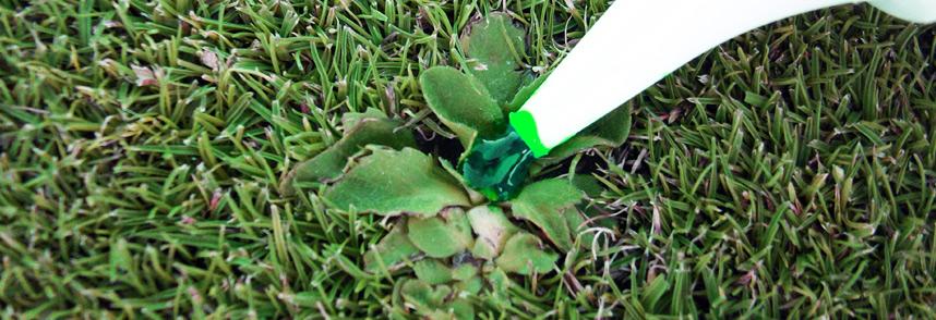 CutnPaste-lawn-raider